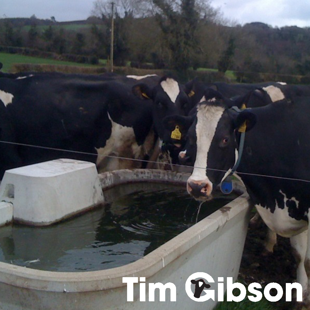 Rubber Feed Trough: Concrete Water Troughs